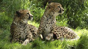 Dagje weg vanuit Arcen: zoopark Overloon
